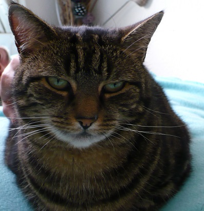 Our lovely cat Lala who died in 2011 - a wise old girl