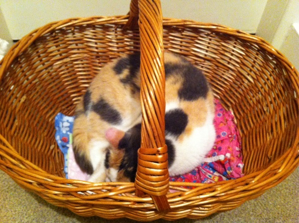 This amazing basket was one of Becksie's favorite recent finds!