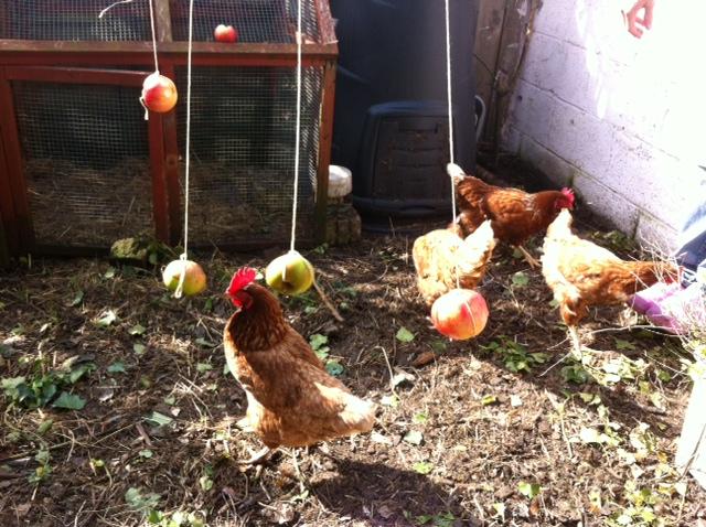 Chickentertainment 3