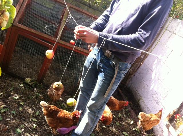 Chickentertainment 4