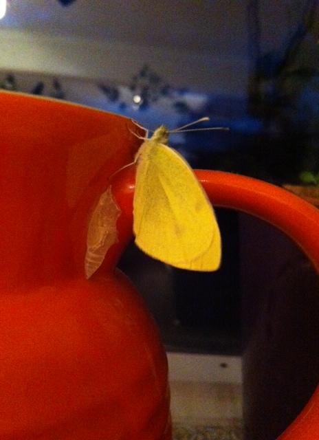 flutterby 4